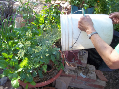 I place empty planters among the garden plants and can pour rain water in them quickly to water deeply. The water slowly soaks into the soil.